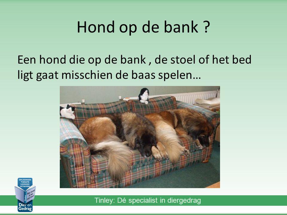 Hond op de bank Een hond die op de bank , de stoel of het bed ligt gaat misschien de baas spelen…