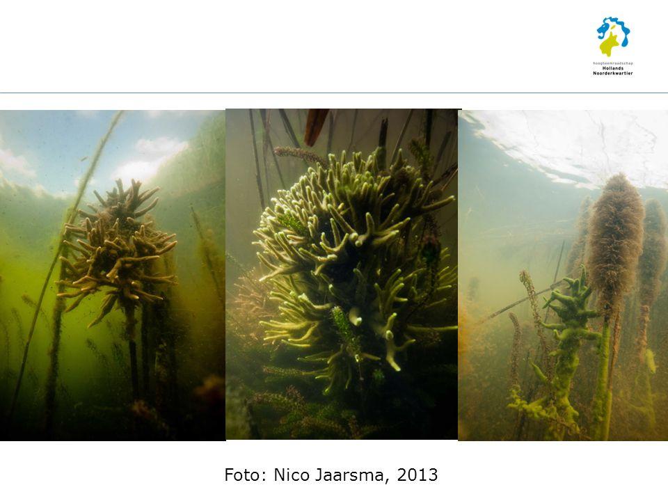 Foto: Nico Jaarsma, 2013