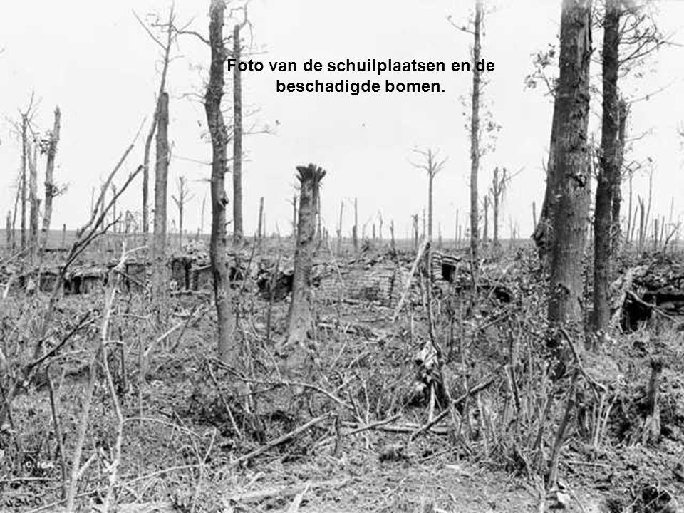 Foto van de schuilplaatsen en de beschadigde bomen.