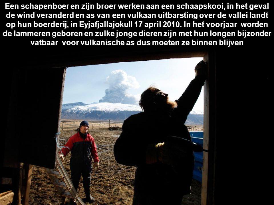 Een schapenboer en zijn broer werken aan een schaapskooi, in het geval de wind veranderd en as van een vulkaan uitbarsting over de vallei landt op hun boerderij, in Eyjafjallajokull 17 april 2010.