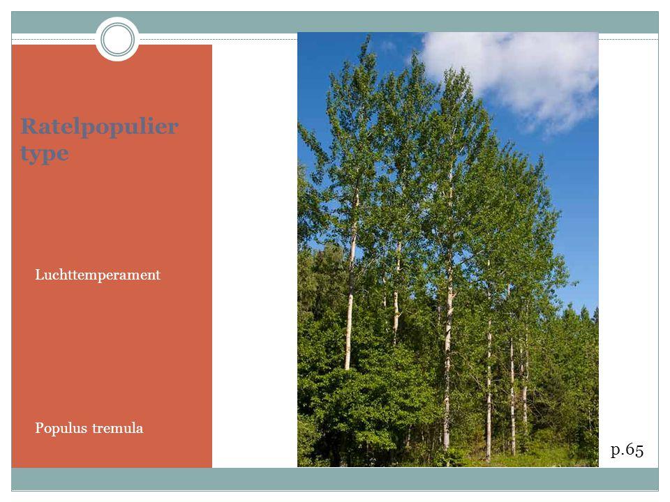 Ratelpopulier type Luchttemperament Populus tremula p.65