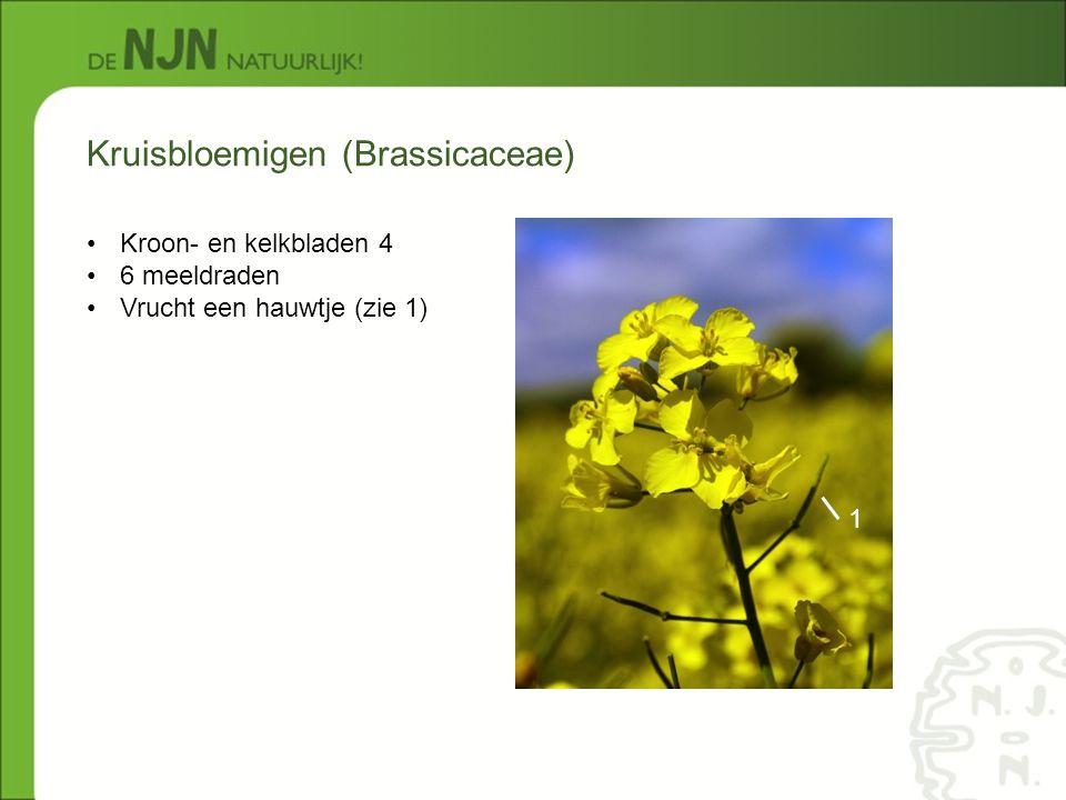Kruisbloemigen (Brassicaceae)