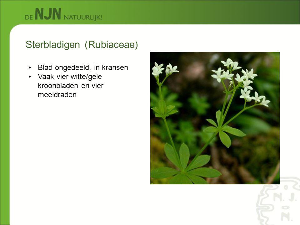Sterbladigen (Rubiaceae)