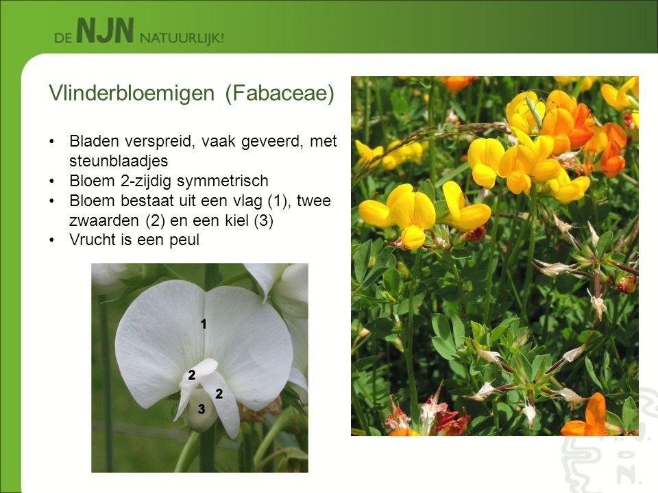 Vlinderbloemigen (Fabaceae)