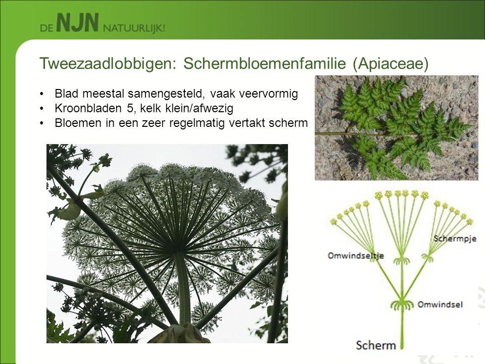 Tweezaadlobbigen: Schermbloemenfamilie (Apiaceae)