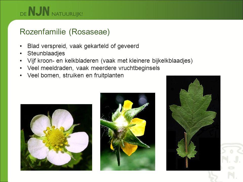 Rozenfamilie (Rosaseae)