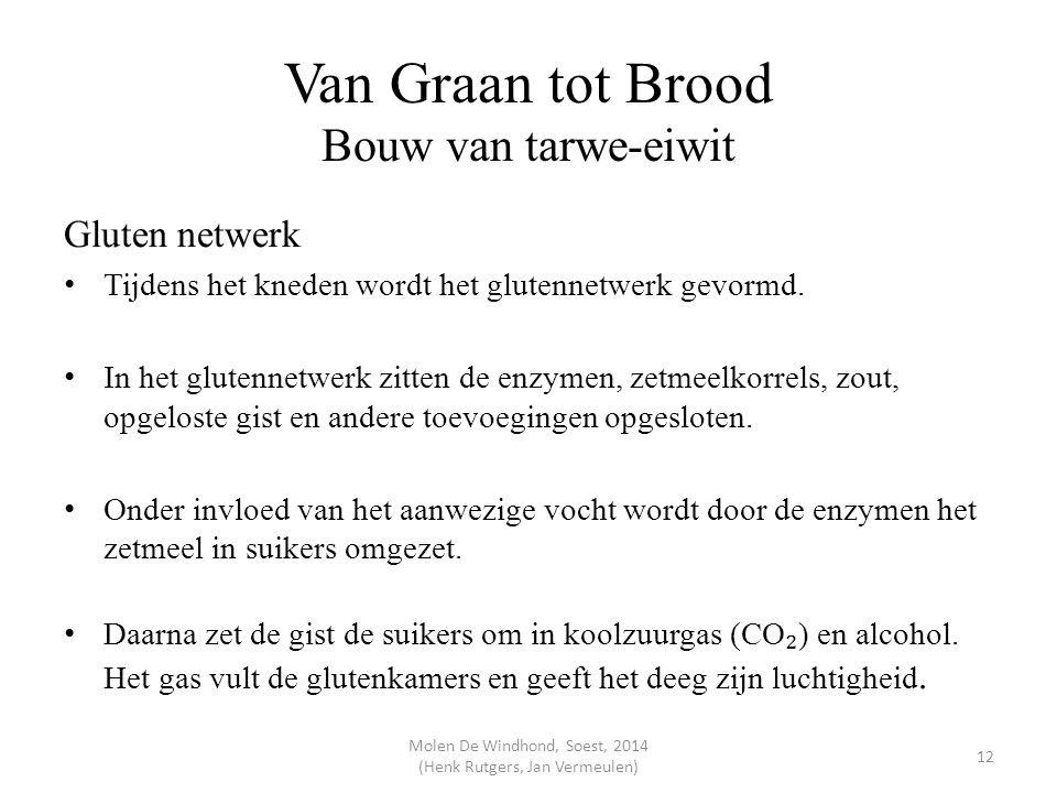 Van Graan tot Brood Bouw van tarwe-eiwit