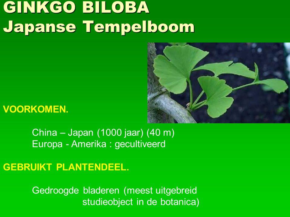 GINKGO BILOBA Japanse Tempelboom
