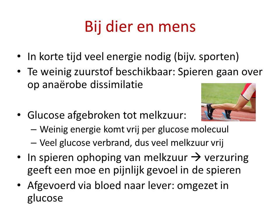 Bij dier en mens In korte tijd veel energie nodig (bijv. sporten)