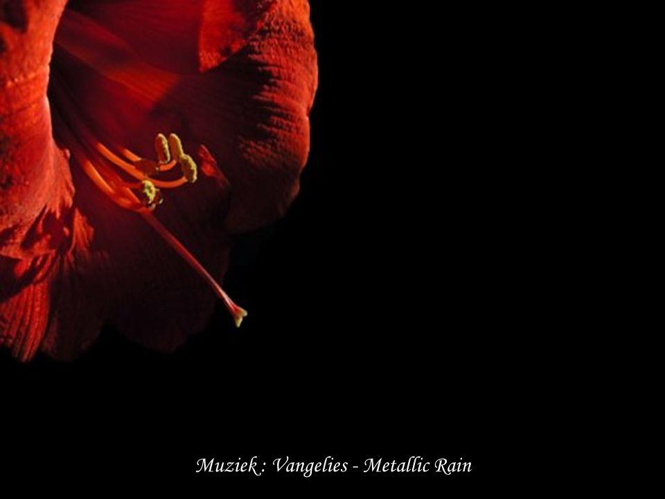 Muziek : Vangelies - Metallic Rain