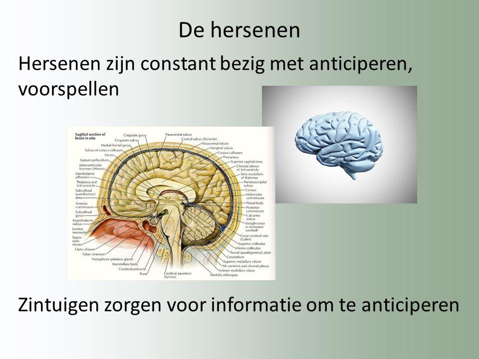 De hersenen Hersenen zijn constant bezig met anticiperen, voorspellen Zintuigen zorgen voor informatie om te anticiperen