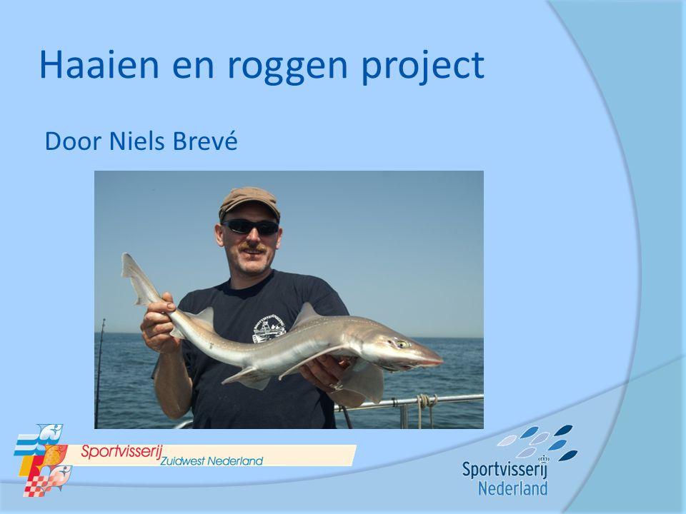 Haaien en roggen project