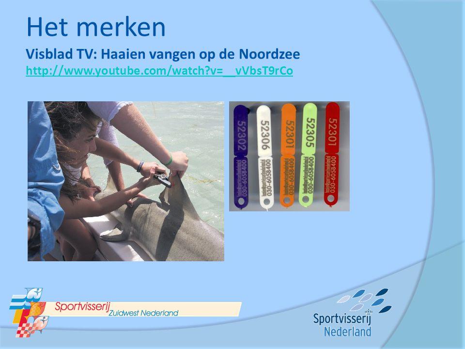 Het merken Visblad TV: Haaien vangen op de Noordzee http://www.youtube.com/watch v=__vVbsT9rCo