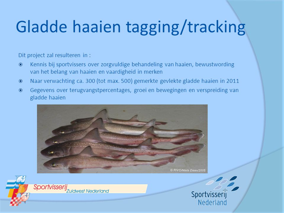 Gladde haaien tagging/tracking