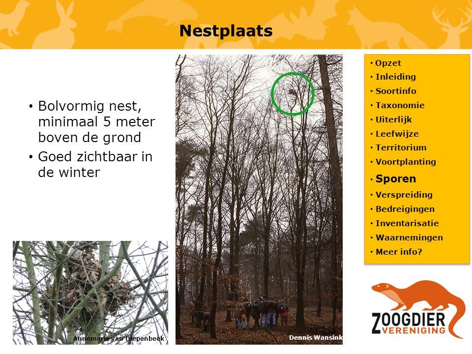 Nestplaats Bolvormig nest, minimaal 5 meter boven de grond
