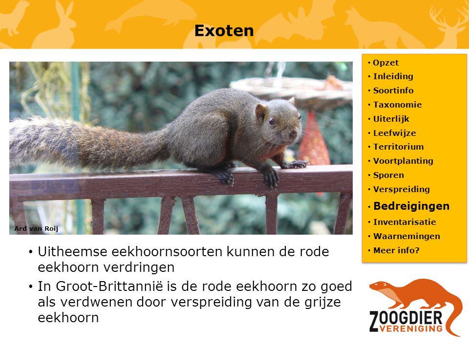Exoten Uitheemse eekhoornsoorten kunnen de rode eekhoorn verdringen