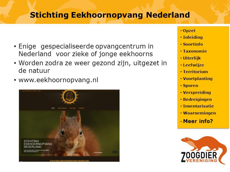 Stichting Eekhoornopvang Nederland