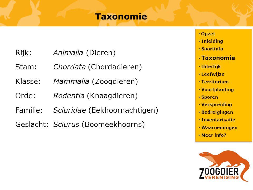Taxonomie Opzet. Inleiding. Soortinfo. Taxonomie. Uiterlijk. Leefwijze. Territorium. Voortplanting.