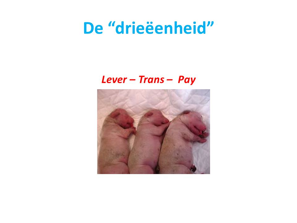 De drieëenheid Lever – Trans – Pay