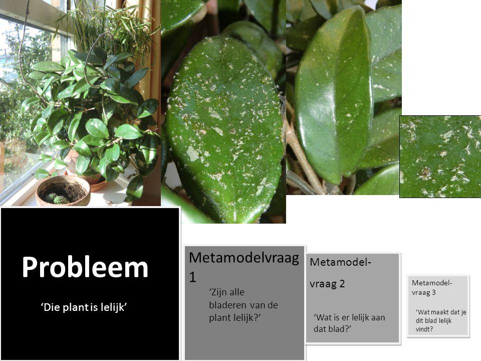 Metamodelvraag 1 Metamodel- vraag 2 'Die plant is lelijk'