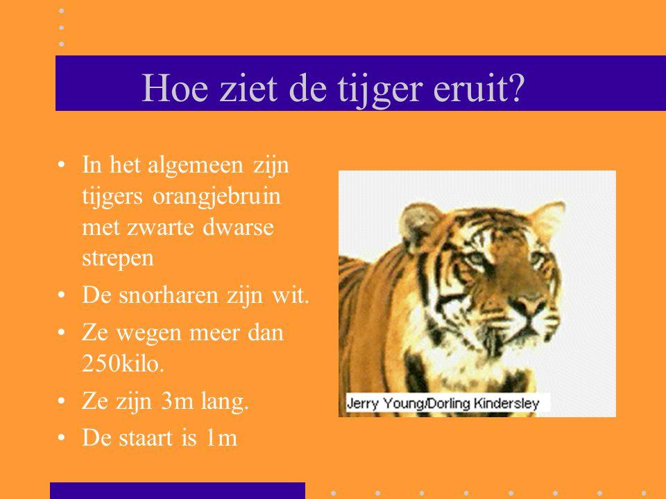Hoe ziet de tijger eruit