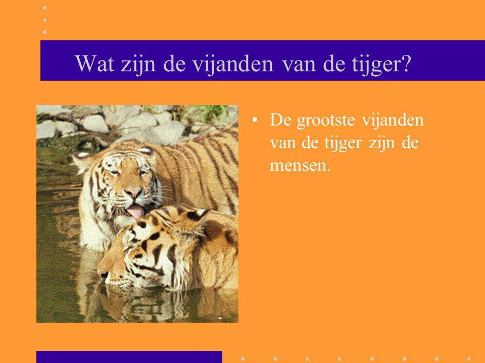 Wat zijn de vijanden van de tijger