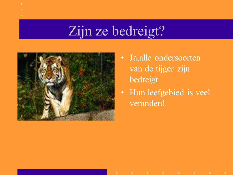 Zijn ze bedreigt Ja,alle ondersoorten van de tijger zijn bedreigt.
