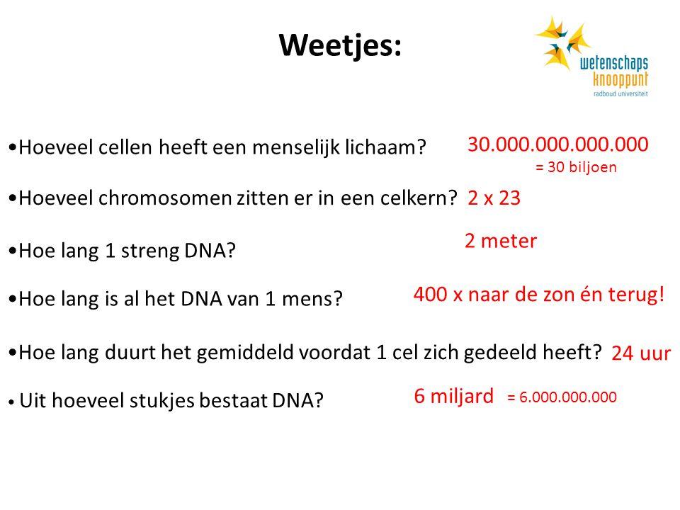 Weetjes: Hoeveel cellen heeft een menselijk lichaam