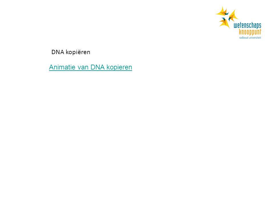 Animatie van DNA kopieren