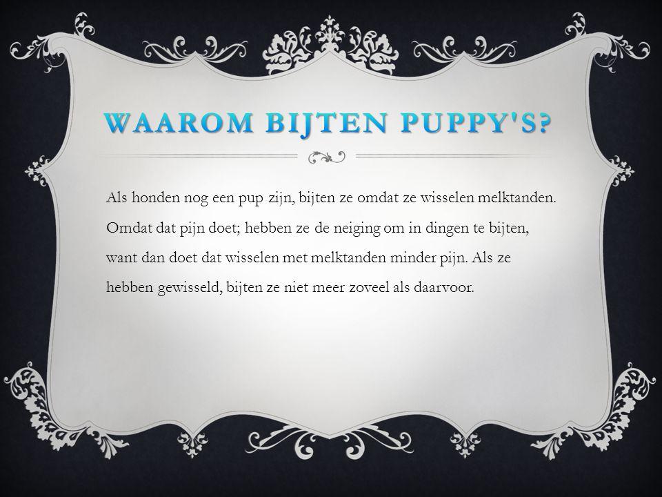 Waarom bijten puppy s