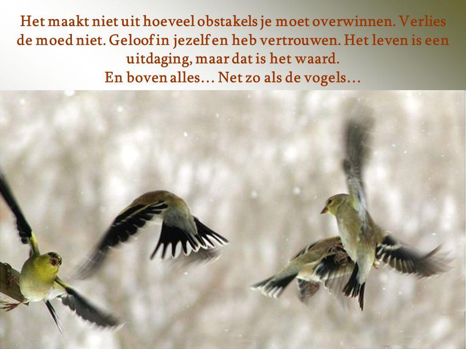 En boven alles… Net zo als de vogels…
