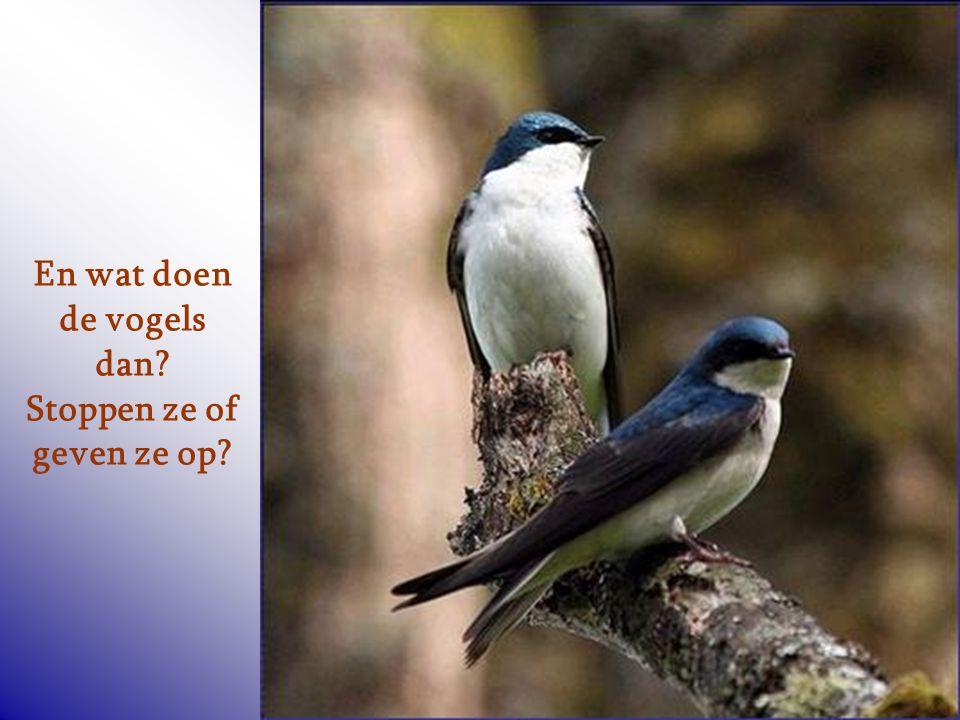 En wat doen de vogels dan Stoppen ze of geven ze op