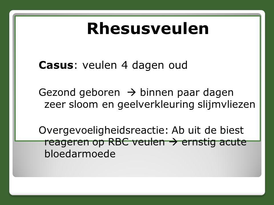 Rhesusveulen Casus: veulen 4 dagen oud