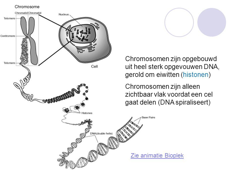 Chromosomen zijn opgebouwd uit heel sterk opgevouwen DNA, gerold om eiwitten (histonen)