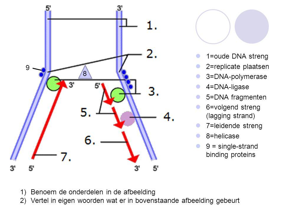 1=oude DNA streng 2=replicate plaatsen. 3=DNA-polymerase. 4=DNA-ligase. 5=DNA fragmenten. 6=volgend streng (lagging strand)
