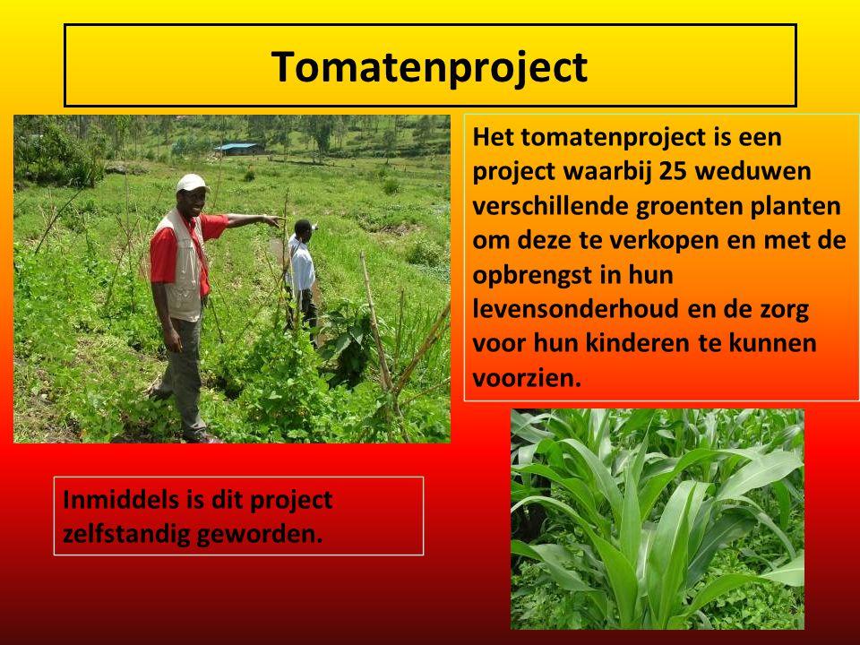 Tomatenproject