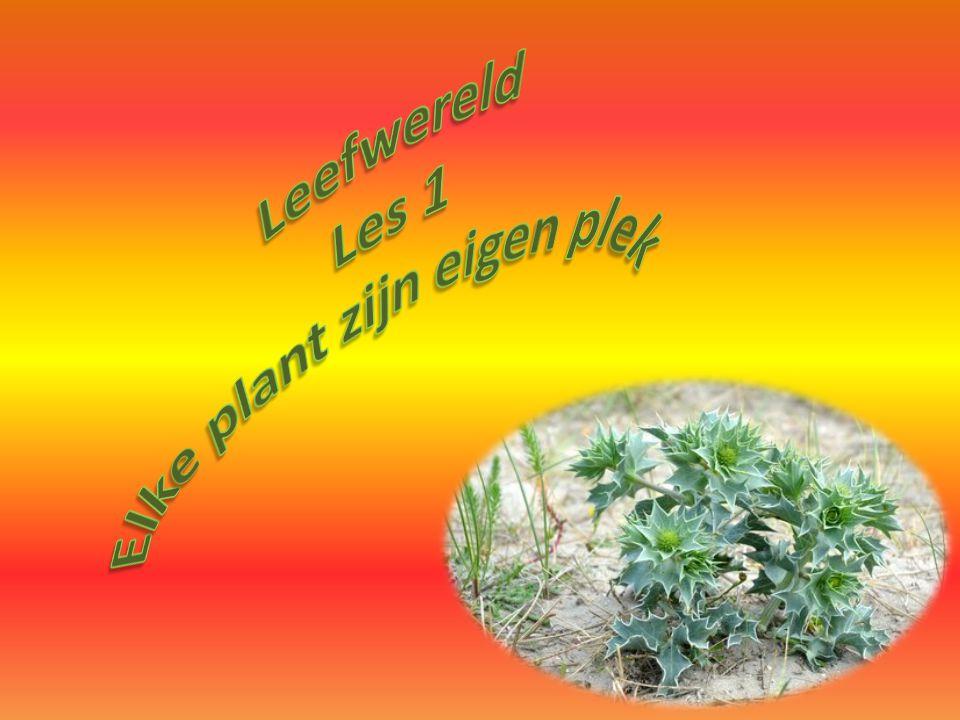Elke plant zijn eigen plek