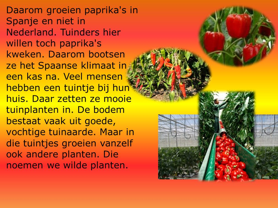 Daarom groeien paprika s in Spanje en niet in Nederland