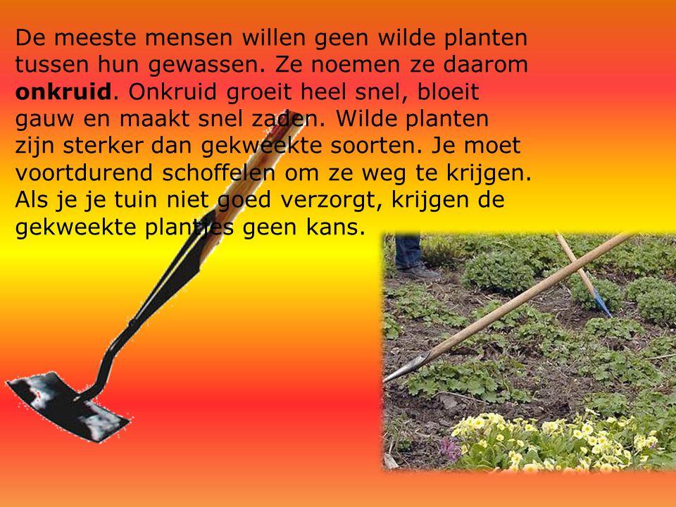 De meeste mensen willen geen wilde planten tussen hun gewassen