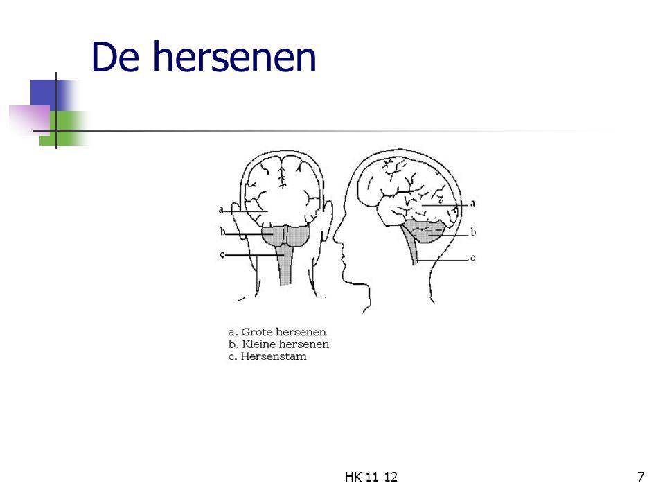 De hersenen HK 11 12