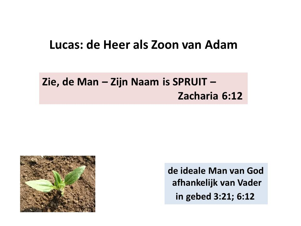 Lucas: de Heer als Zoon van Adam