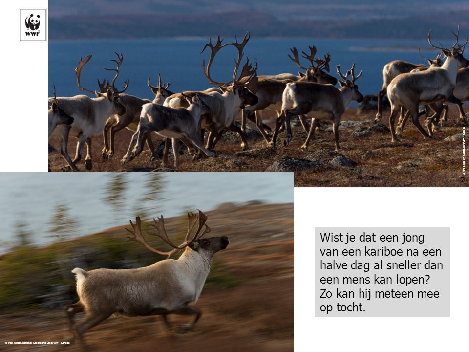 © GaryAndJoanieMcGuffin.com/WWF-Canada