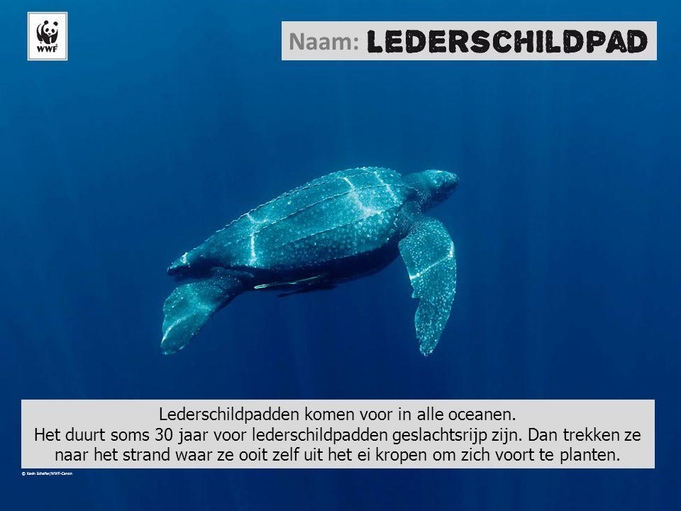 Lederschildpadden komen voor in alle oceanen.