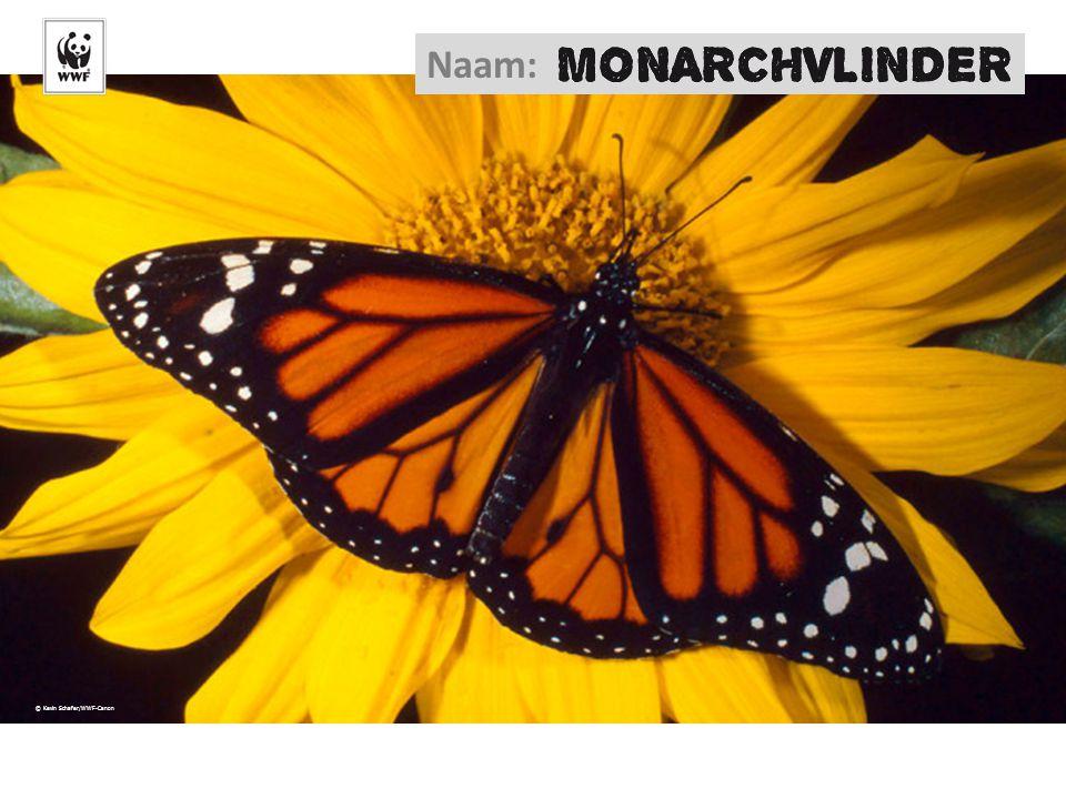 Naam: © Kevin Schafer/WWF-Canon