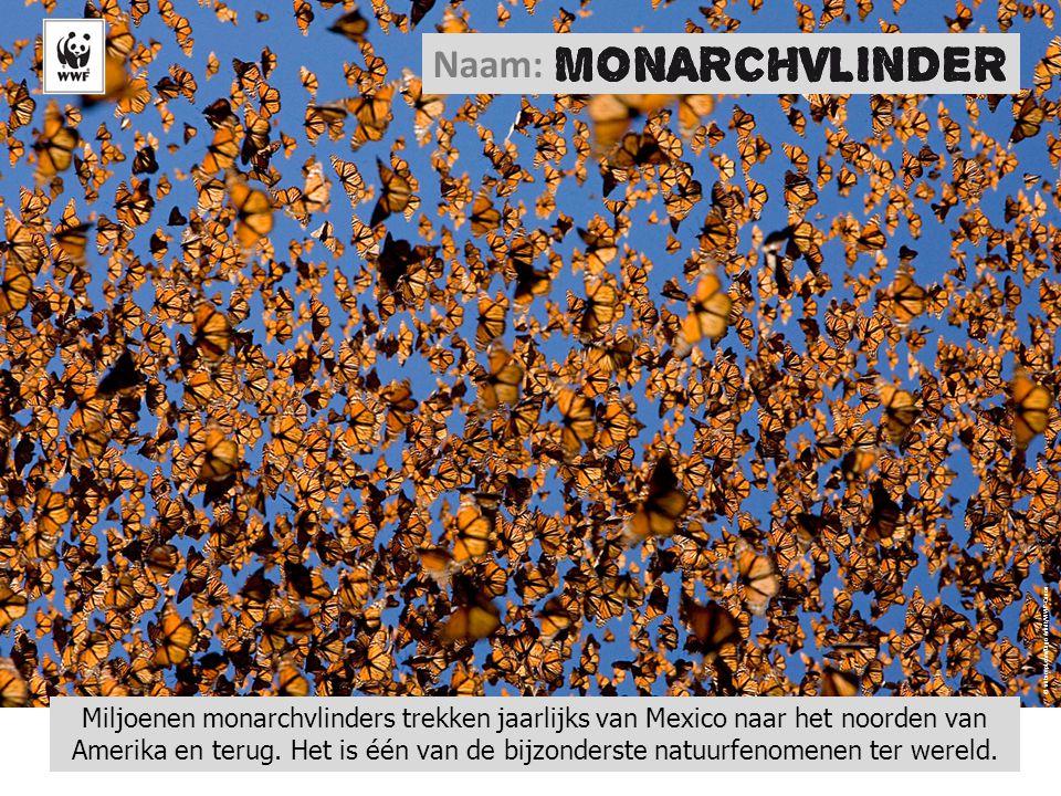 Naam: © naturepl.com/Ingo Arndt/WWF-Canon.