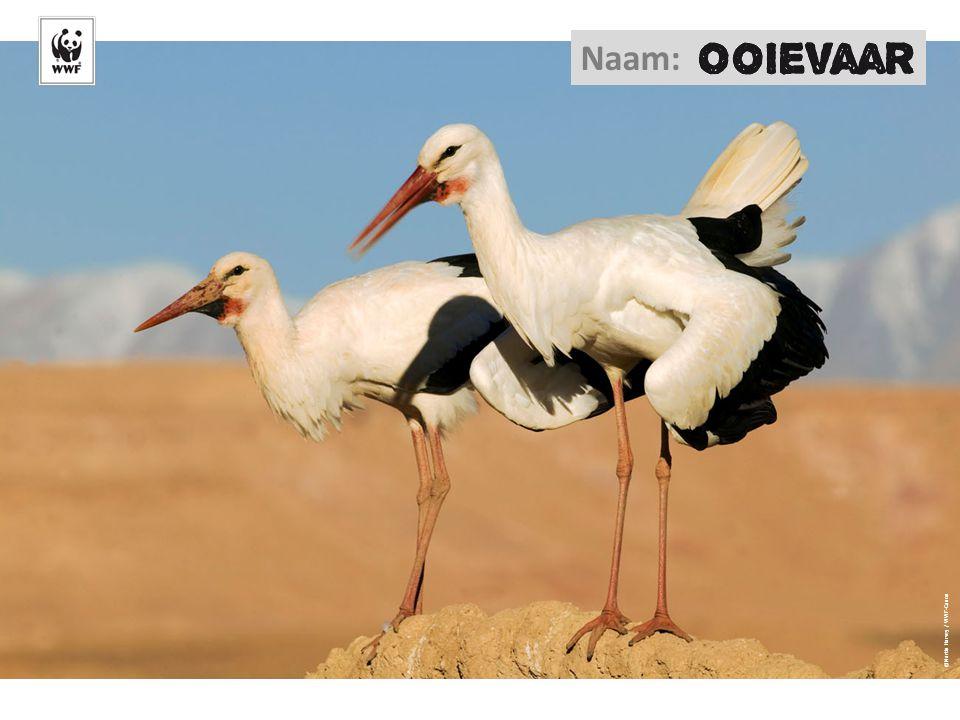 Naam: ©Martin Harvey / WWF-Canon