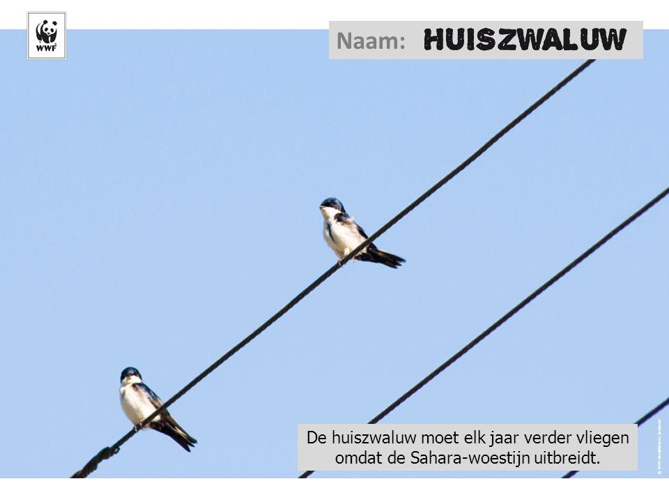Naam: © WWF-Brazil/Adriano Gambarini.