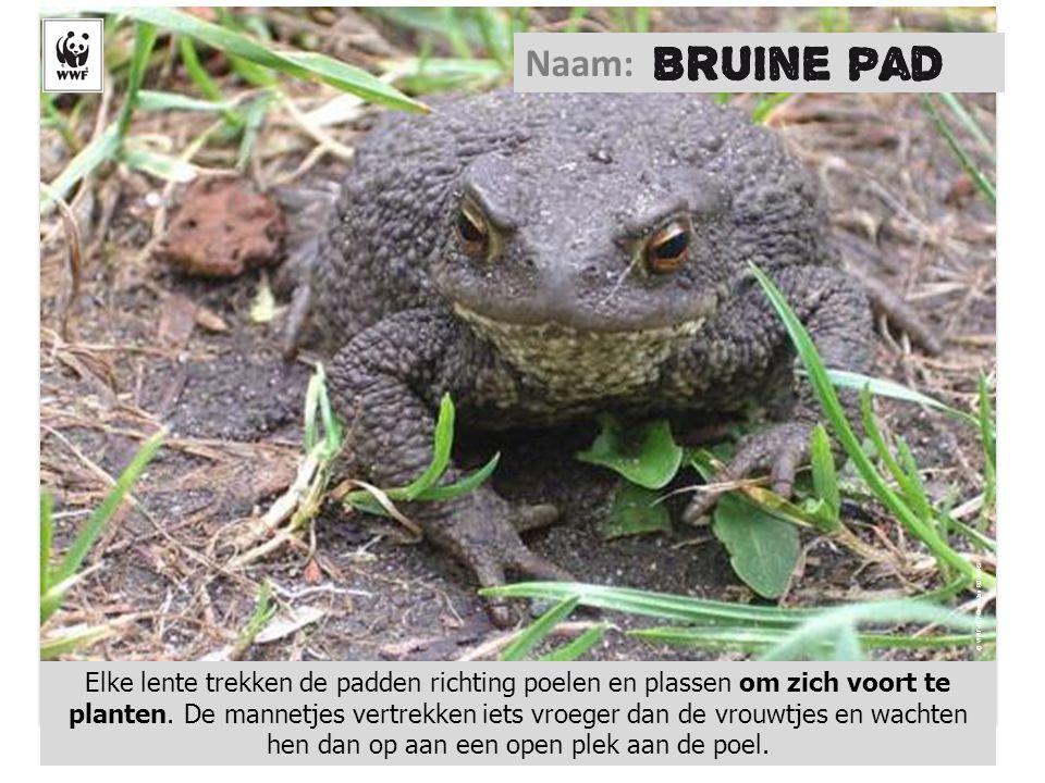 Naam: © WWF-NL / Geert-Jan ROEBERS.