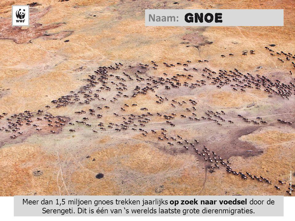 Naam: ©Martin Harvey / WWF-Canon.