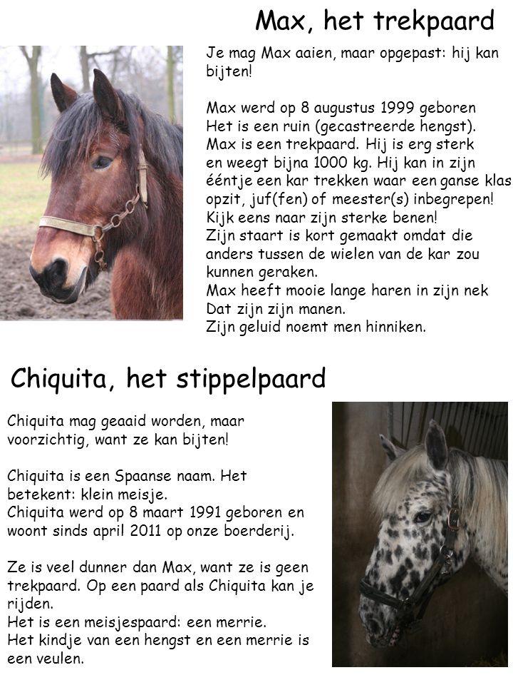 Chiquita, het stippelpaard